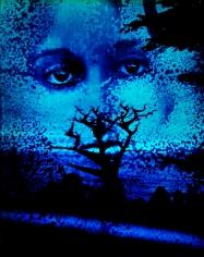 Kali, Blue Cypress, Carmel, CA, 1969