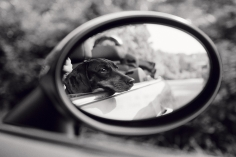 Priscilla Rattazzi, Lola, Rear View Mirror, East Hampton, 2007
