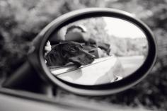 Priscilla Rattazzi, Lola, Rear View Mirror, East Hampton, 2007
