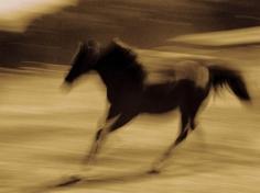 Michael Eastman, Horse # 89, 2000