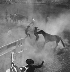 Andre de Dienes, Wild Horse Riding Contest at the Rodeo, Arizona 1950