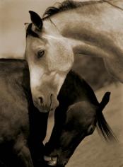 Michael Eastman, Horse # 143, 2001