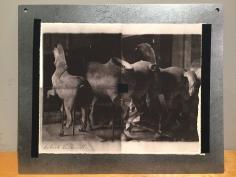 Deborah Turbeville, Horse Statues, Unseen Versailles, 1981