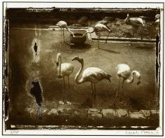 Sarah Moon, Les oiseaux d'Anvers, 1990