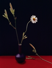 Horst, Marguerite and Day Lily Buds, c. 1985