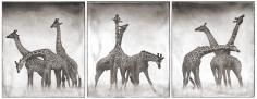 Nick Brandt, Giraffe Triptych, Maasai Mara, 2005