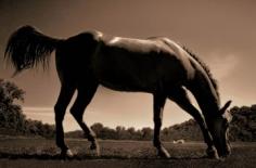 Michael Eastman, Horse # 92, 2000