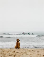 Michael Dweck, Surf Dog, Montauk, New York, 2002