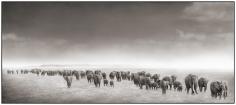 Nick Brandt, Elephant Exodus II, Amboseli, 2004