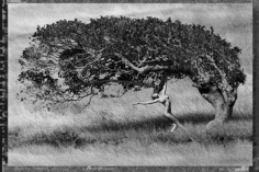 Marco Glaviano, Ashley Dancing with Tree, St. Barths, 1984