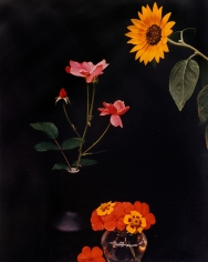 Horst P. Horst, Sunflower, Roses, and Poppies, c. 1985