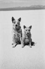 Arthur Elgort, Dogs, Death Valley, California, 2001