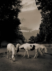 Michael Eastman, Horse # 40, 2000