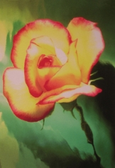 Lillian Bassman, Flower 21 (Yellow and Pink Rose), 2006