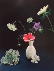 Horst P. Horst, Platycum, Betty Pryor Rose, and Queen Anne's Lace, circa 1985