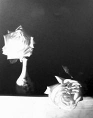 Horst,  White Roses, Oyster Bay, 1989