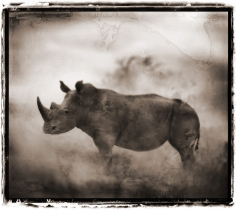 Nick Brandt, Rhino In Dust, Lewa Downs, 2003