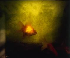 Isabella Ginanneschi, Trapped Nature, 2002