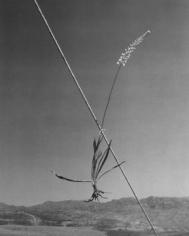 Horst P. Horst, Ashodel on a Tent Guy, Quradaq, Iran, 1949