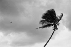 Priscilla Rattazzi, Hitchcock Palms II, Palm Beach, 2008