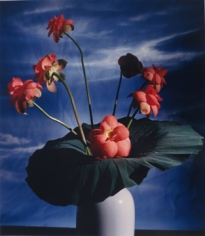 Horst P. Horst, Lotus Blossom
