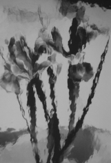 Lillian Bassman, Flower 15 (Irises), 2006