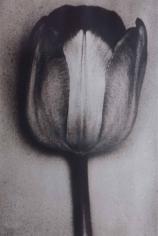 Sheila Metzner, Silver Tulip. 2002
