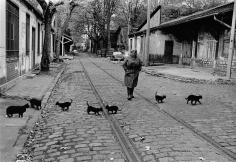 Robert Doisneau, Les Chats de Bercy, 1985