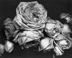 Edward Steichen, Heavy Roses, Voulangis, France, 1914