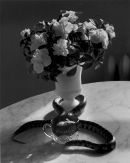 André Kertész, Still-life with Flowers and Snake, New York, 1960