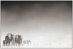 Nick Brandt, Elephant Ghost World, Amboseli 2005