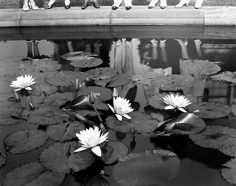 Edward Steichen, Lily Pond, Mount Kisco, New York c., 1935