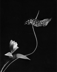 Horst P. Horst, Anthurium with Tulip, New York, 1989