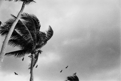 Priscilla Rattazzi, Hitchcock Palms I, Palm Beach, 2008