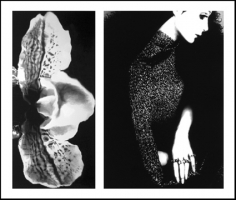 Lillian Bassman, Flower 19 (Speckled Orchid), 2006