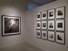 Melvin Sokolsky, Exhibition View