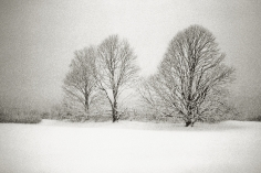 Priscilla Rattazzi, Three Lindens in a Snowstorm, East Hampton, 1996