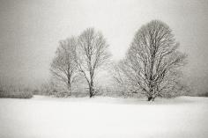 Priscilla Rattazzi, Three Lindens in a Snowstorm, East Hampton, 1996