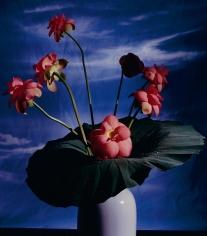 Horst, Lotus, c. 1985