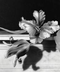 Horst P. Horst, Tulips, Oyster Bay, Long Island, 1989