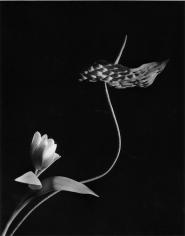 Horst P. Horst, Anthurium with Tulip, 1989