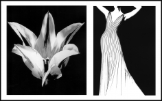 Lillian Bassman, Flower 29 (Striped Tulip), 2006