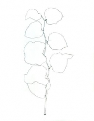 Ellsworth Kelly, Briar, 1960, Graphite on paper