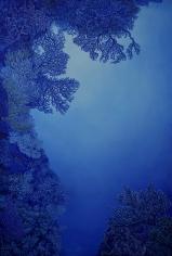 """Nikolina Kovalenko painting entitled """"Twilight Canyon."""""""