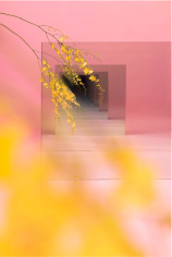 BRINTZ GALLERY, SARAH MEYOHAS, Pink and Yellow Speculation, 2015, Chromogenic Print, 90 by 60 inches, Unique Art