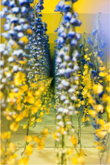 BRINTZ GALLERY, SARAH MEYOHAS, Yellow and Blue Speculation, 2017, Chromogenic Print, 60 by 40 inches, Edition is 4 of 5, plus 2 Artist Proofs, Unique Art