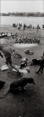 Raghu Rai FEEDING PIGEONS, HOOGLY, KOLKATA 2005 Digital scan of photographic negative on archival paper 54 x 20 in.
