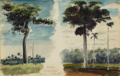 """Charles DeWolf Brownell  (1822 - 1909) Ceibus (Trop. Trees & Plants) 1859 Watercolor on Paper H 5.25"""" x W 8.5"""" Titled, Inscribed and Dated Bottom Center Edge Price Upon Request"""