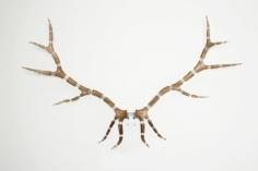 Michael Joo. Improved Rack(Elk #14), 2008.Elk antlers, stainless steel, 230 x 143 x 45 cm.Courtesy of the artist & PKM Trinity Gallery.