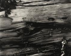 Paul Strand - Driftwood #3, 1928 | Bruce Silverstein Gallery